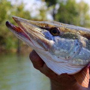 gone_fishing_22