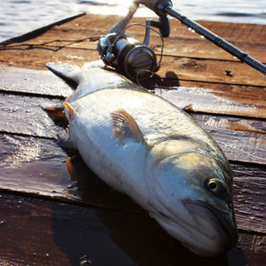 gone_fishing_25