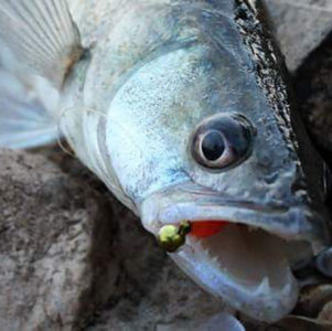gone_fishing_28