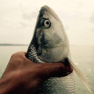 gone_fishing_31